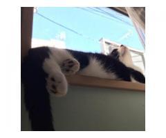 【猫のいるシェアハウス living cat's】武蔵関